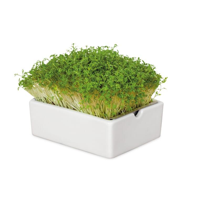 Anzuchtset Microgreens